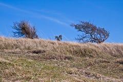 Susi drzewa na wietrznym dniu Obrazy Stock