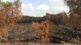 Susi drzewa palący obraz stock
