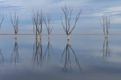 Susi drzewa zanurzający w jeziorze obrazy stock