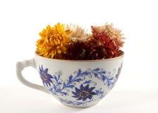 susi kwiaty Fotografia Stock