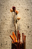 susi kwiaty Obrazy Royalty Free