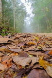 Susi liście spadają puszek mgłowa droga w drewnach Obrazy Stock