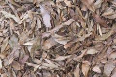 Susi liście na ziemi Obraz Stock