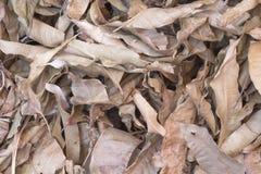 Susi liście na ziemi Zdjęcia Royalty Free
