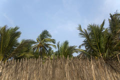 Susi palma liście w Agonda, India Fotografia Royalty Free