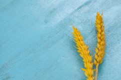 Susi pszeniczni ucho na błękitnym tle Zdjęcia Stock