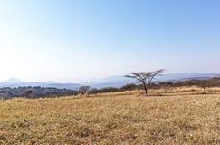 Susi zimy trawy drzewa i linia horyzontu na Wiejskim krajobrazie Obraz Royalty Free