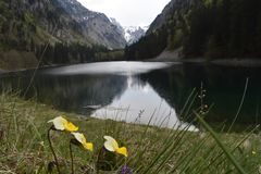 The Susicko lake and the Susica valley. The Durmitor National Park,Montenegro royalty free stock photo