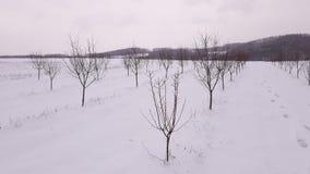 Susini sotto neve Fotografia Stock