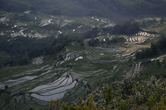 Susnet on rice field terraces Stock Photos