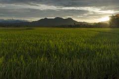 Susnet和ricefield 库存图片