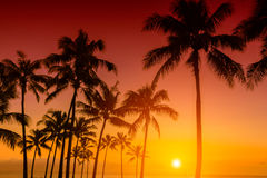 Susnet tropical Photographie stock
