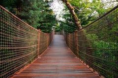 Suspansion桥梁或树的人行桥中部,看法低谷人行桥 库存图片