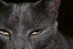 Suspect. Close up of cats eyes showing suspicious behavior or suspicious of others Stock Photography