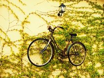 Suspended bicycle Stock Photography