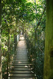 Suspended Bridge. Suspended walking bridge deep in the forest with filtered light Royalty Free Stock Photography