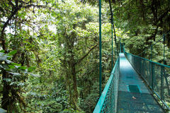 Suspended bridge above the forest Royalty Free Stock Photo
