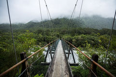 Suspended bridge to the forest Stock Images