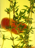 Suspended Chillies And Thyme Royalty Free Stock Photography