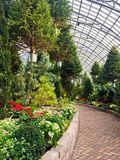 Suspended Christmas Trees in Garfield Park Conservatory Stock Images