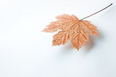 Suspended leaf stock photography