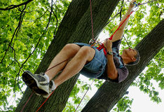 Suspended from ropes in a Tree. A man is suspended in a tree top high off the ground by ropes, pulleys and a harness Royalty Free Stock Photo