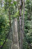 Suspended tree top or canopy walk in rain forest of Nigeria royalty free stock image
