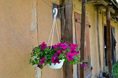 Suspended vase. With purple flowers near the barn Royalty Free Stock Photography
