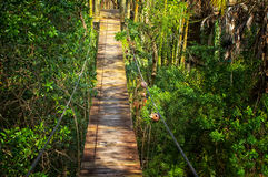 Suspended walking bridge in jungle Royalty Free Stock Photos