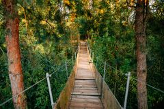 Suspended Wooden Bridge Over A Forest Lake In Belarus. Summer La royalty free stock photos
