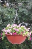 Suspendierung des Blumentopfes Stockbilder