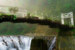 Suspendierungsbraut über dem Fluss im tropischen Wald Lizenzfreie Stockfotografie