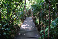 Suspending bridge. A suspending bridge  and footpath inside the tropical forest ,sanya hainan,china,asia Stock Photos