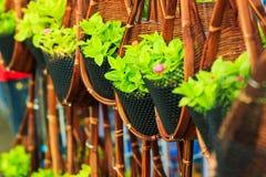 Suspensão da planta Fotos de Stock Royalty Free