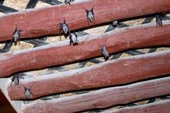 Suspensão dos bastões de cabeça para baixo do teto Imagem de Stock
