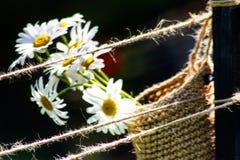 Suspensão para fora no jardim Imagem de Stock Royalty Free