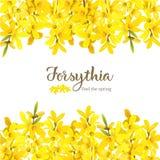 Suspensa di forsythia, modello giallo sbocciante lanuginoso della carta dell'albero della molla Bell dorata, fiori incornicia alt illustrazione di stock