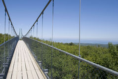 Suspension bridge. Over a forest Royalty Free Stock Image