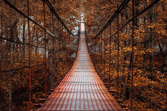 Suspension bridge, beautiful autumn Stock Photography