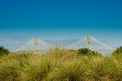 Suspension Bridge Behind Sea Grasses Royalty Free Stock Photo