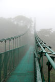 Suspension bridge in Cloud forest Royalty Free Stock Photo