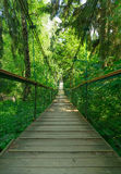 Suspension bridge ferriage in the woods Royalty Free Stock Image