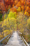 Suspension bridge in the forest Stock Photography