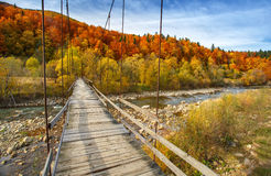 Suspension bridge in the forest Royalty Free Stock Photo