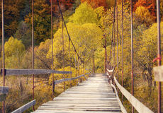 Suspension bridge in the forest Royalty Free Stock Photos