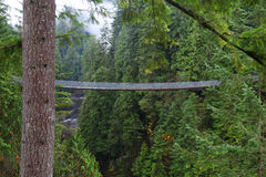 Suspension bridge in forest Royalty Free Stock Photos