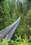 Suspension bridge in forest Stock Images