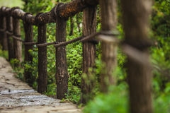 Suspension bridge in the forest Stock Image