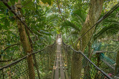 Suspension bridge in the forest Royalty Free Stock Image