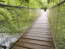 Suspension bridge in the forest in prespective Stock Photography